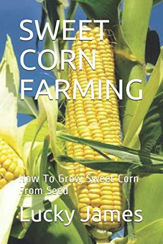 SWEET CORN FARMING: How To Grow Sweet Corn From Seed
