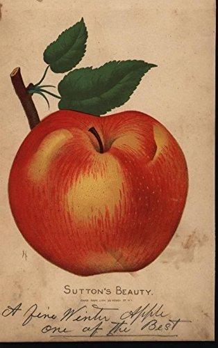 Suttons Beauty Apple Luscious Fruit c.1880-90 antique color lithograph print