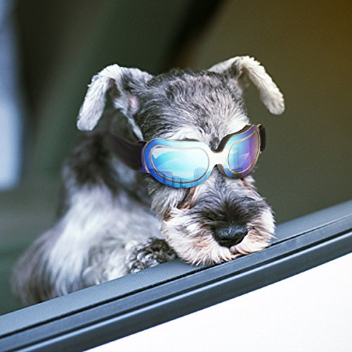 Enjoying Dog Sunglasses - Small Dog goggles UV Protection Windproof Adjustable Pet Goggles for Doggy Puppy Cat - Small Blue by Enjoying