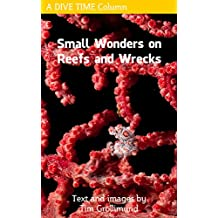 Small Wonders on Reefs and Wrecks