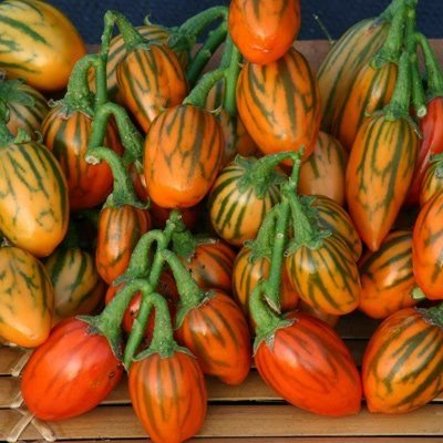 New Home Garden Plant 10 Seeds Solanum Aethiopicum African Eggplant Vegetable Seeds ()