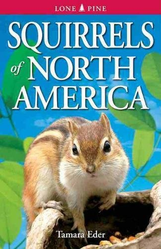 Squirrels of North America