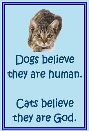 2) - novedad gato imanes de nevera - Creo - Regalos para dueños de gatos: Amazon.es: Hogar