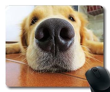 Amazon Com Custom Mouse Pad Funny Dog Fuca Muzzle Dog Golden