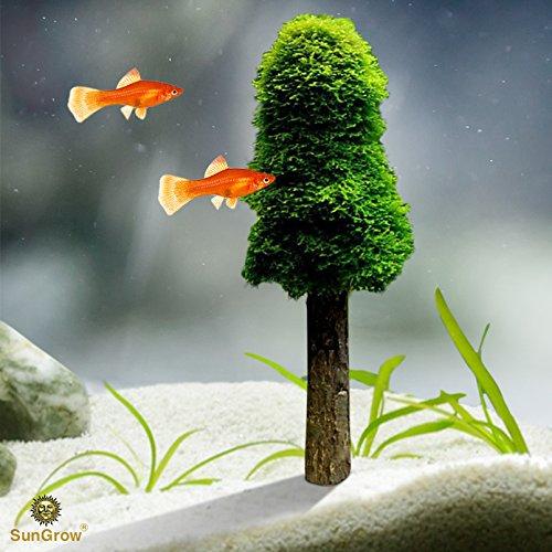 Aquarium Moss Decoration (2pcs) by SunGrow --- Grow Your Own Mini Christmas Tree Plant - Beautiful Fish Tank Decoration - Grow Aquatic plants, Moss and Other Plants