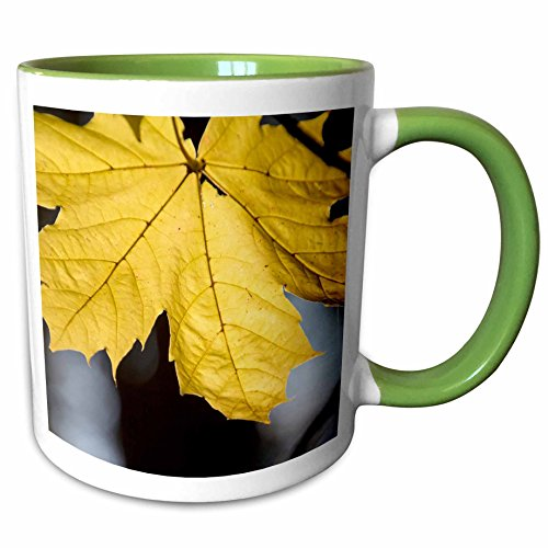 3dRose Danita Delimont - Trees - Sugar maple, fall, near Freeport, Maine - 11oz Two-Tone Green Mug - Outlets Freeport Maine