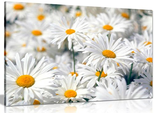 - Daisys Daisy Canvas Wall Art Picture Print (30x20in)