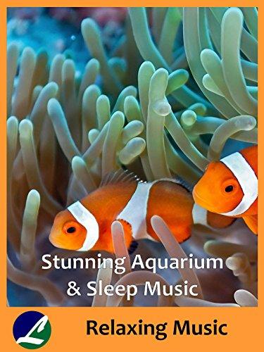 stunning-aquarium-sleep-music-relaxing-music