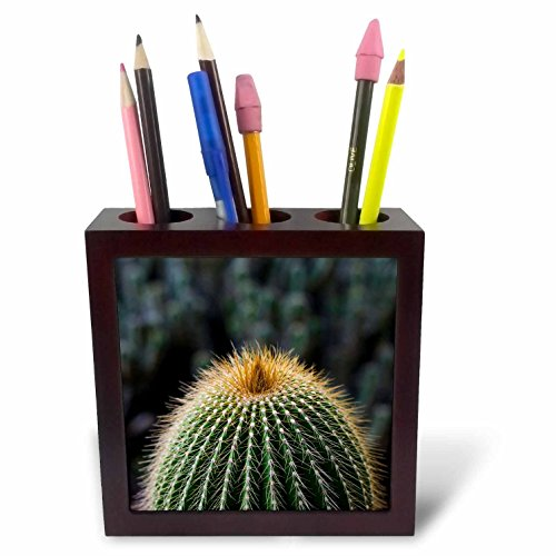 3dRose Danita Delimont - Cactus - Spain, Canary Islands, La Gomera, close-up of cactus. - 5 inch tile pen holder (ph_257881_1) by 3dRose