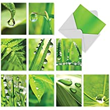 M2015 Just Dew It: 10 Assorted Blank All-Occasion Notecards Feature Dew Drops on Leafy Greens, w/White Envelopes - Folded Cards