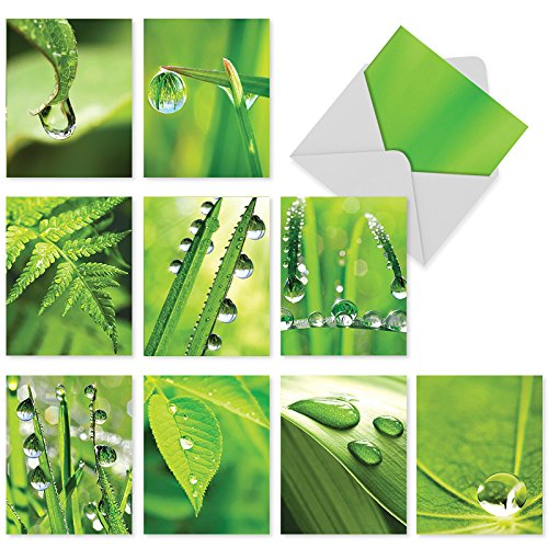 M2015 Just Dew It: 10 Assorted Blank All-Occasion Note Cards Feature Dew Drops on Leafy Greens, w/White Envelopes.