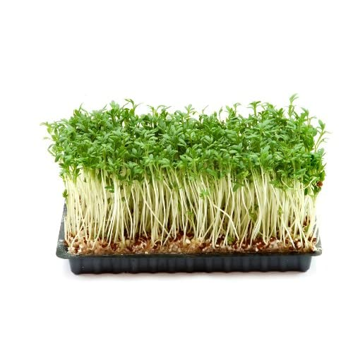 Nice Cress, Curled Herb Seeds supplier