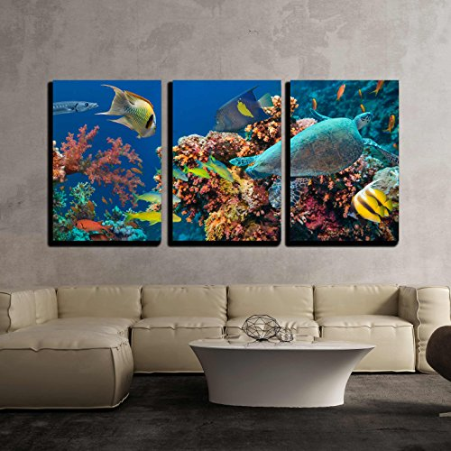 (wall26 - 3 Piece Canvas Wall Art - Colorful Underwater Offshore Rocky Reef with Coral and Sponges - Modern Home Decor Stretched and Framed Ready to Hang - 24
