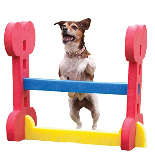 Agility Hurdle - Dog play & exercise toy (Used Agility Equipment Dog)
