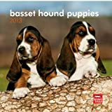Basset Hound Puppies 2013 7X7 Mini Wall