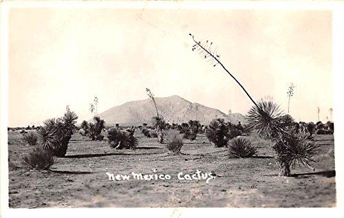 New Mexico Cactus Unidentified Location , New Mexico postcard