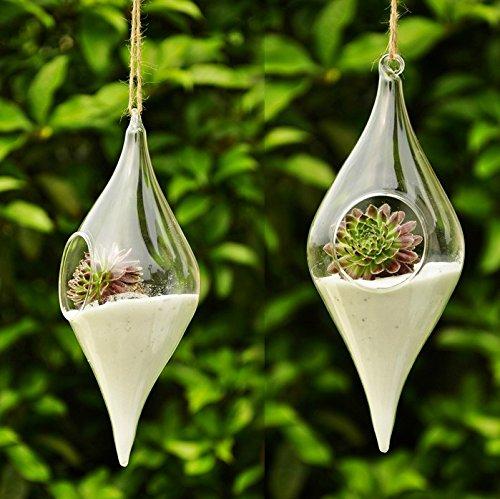 Amazon Pack Of 2 Hanging Terrarium Glass Vase Flower Air Plant