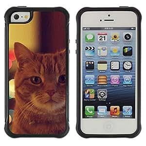 Suave TPU GEL Carcasa Funda Silicona Blando Estuche Caso de protección (para) Apple Iphone 5 / 5S / CECELL Phone case / / Garfield Ginger Orange Mongrel Cat /