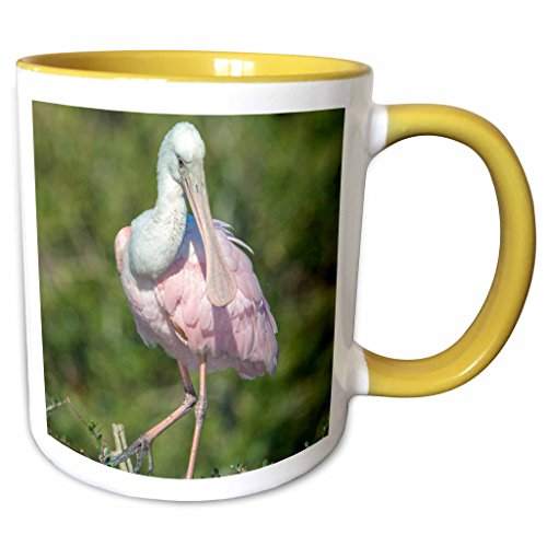3dRose Danita Delimont - Birds - USA, Florida, St. Augustine, Roseate Spoonbill at Alligator rookery - 11oz Two-Tone Yellow Mug - Florida Outlets Augustine St