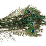 24pc Peacock Big Eye Feathers Long 50cm 20'' Decoration