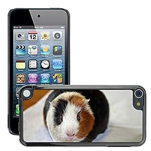 Etui Housse Coque de Protection Cover Rigide pour // M00109042 Guinea Pig Amanda Desde El Frente // Apple ipod Touch 5 5G 5th