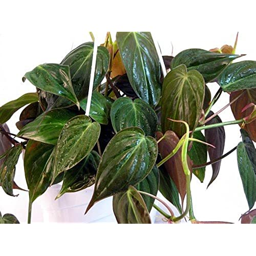 stunning house plants delivered. Top Selected Products and Reviews Plants for Low Light  Amazon com