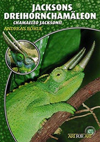 Jacksons Dreihornchamäleon: Chamaeleo jacksonii
