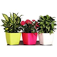 Antier 2-Inch Plastic Square Nursery and Seedling Pots, Plastic Plant Pots Planter,Pack of 3 in Multicolor