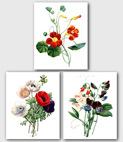 (Set of 3 Botanical Prints, Red Tropaeolum, Poppy, Sweet Pea Flowers, 8 x 10 Inches, Unframed)