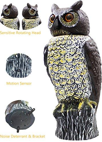 owl rotating head - 4