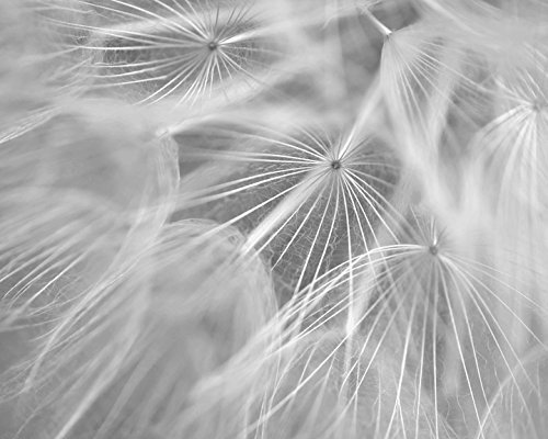 Dandelion Artwork, Pale Grey White Flower Abstract Wall Art, Modern Black and White Photography Print, Large Floral Picture, Nursery, Baby Girl Room Decor, Vertical or Horizontal by Natural Photography Spa