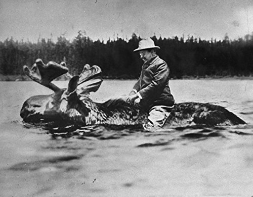 Theodore Teddy Roosevelt Riding a Moose Photo Art Photos 8x10