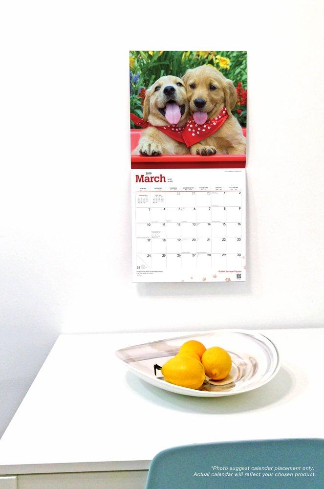 Calendrier – Calendrier mural Pandas 2019 Calendar Multilingue 1 septembre 2018 Inc Browntrout Publishers Brown Trout 1465075593 Tiere // Jagen // Angeln