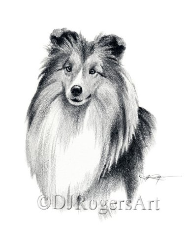 Sheltie Pencil Drawing Shetland Sheepdog Art Print by Artist DJ Rogers