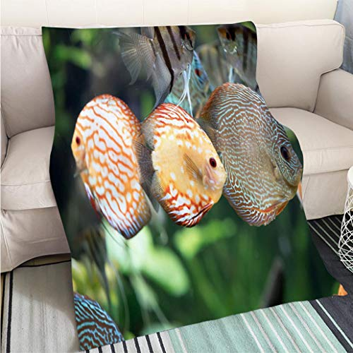 BEICICI Home Digital Printing Thicken Blanket Pigeon Blood Discus Fish Symphysodon aequifasciatus Art Blanket as Bedspread Gold White Bed or Couch