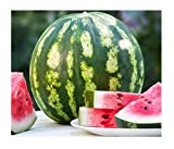 David's Garden Seeds Fruit Watermelon Crimson Sweet OS2133 (Red) 50 Heirloom Seeds