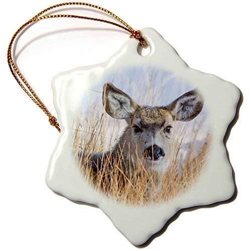 QMSING Animals - Wyoming, Mule Deer doe Resting in Grasses. - inch Snowflake Porcelain Ornament BH564010
