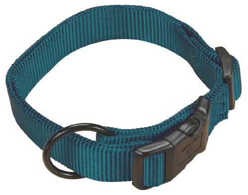 Hamilton 3/4″ Adjustable Dog Collar, adjusts from 16-22 inches, Teal, My Pet Supplies