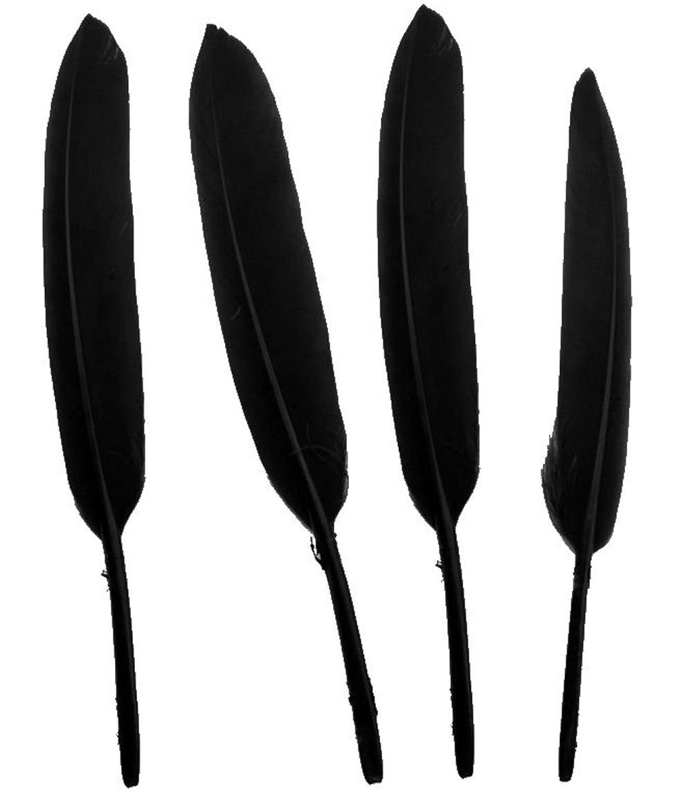 Black Goose Quill Feathers x10 (4 to 6 inch) by GC Gregory Crafts & Gifts