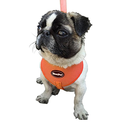 Reflective harness Walking Orange Medium