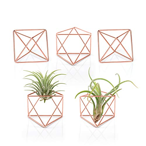 "Mkono 5 Packs Air Plant Holder Mini Metal Tabletop Himmeli Decor Modern Geometric Planter Tillandsia Display Stand with Each Side 2.6"" Long for Home, Office and Wedding Gift Idea, Rose Gold"
