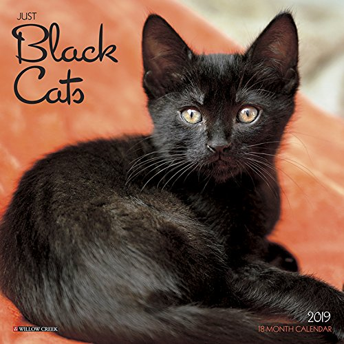 Black Cats Mini 2019 Wall Calendar