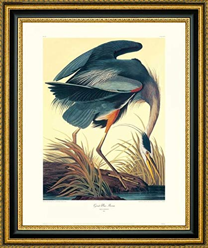 Great Blue Heron (Decorative Border) by John James Audubon - 26.25