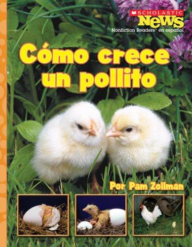 Como crece un pollito / A Chick Grows Up (Scholastic News Nonfiction Readers En Espanol) (Spanish Edition)