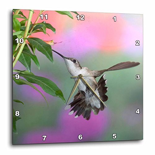 3dRose Ruby-Throated Hummingbird Female - Wall Clock, 15 by 15-Inch ()