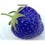 60 SEMI DI FRAGOLE BLU