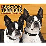Just Boston Terriers 2017 Box Calendar (Dog Breed Calendars)