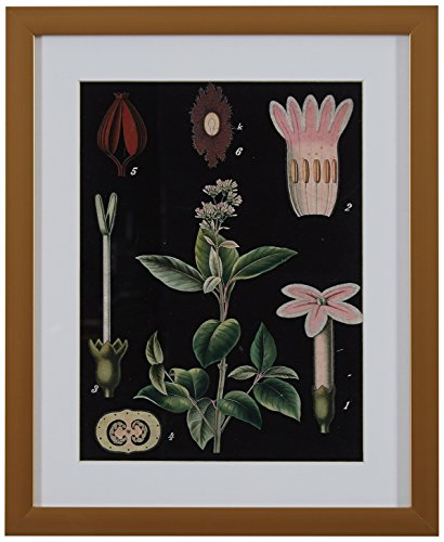 - Rivet Green and Pink Botanical Anatomy Print in Gold Frame Wall Art, 13