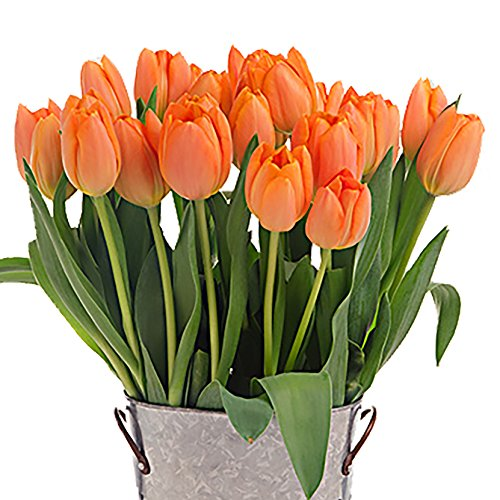 Stargazer Barn - 24 Stems Cheery Orange Juice Tulips with Rustic Décor Style Galvanized Vase - Direct From Farm - 2 Dozen Orange Tulips - Fresh Cut - Sustainably Grown in California - Orange Flowers by Stargazer Barn