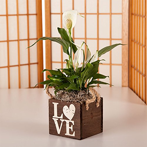 Peace Lily in Wood Love Container - Live Plant Gift - Green Gift - Sympathy Gift - Sympathy Plant - Bereavement Gift -Valentine's Plant - Ships fast via 2-Day Air